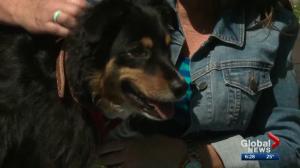 Alberta dog honoured for saving owner's life