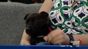 Second Chance Animal Rescue Society stops by with 3 adorable pups
