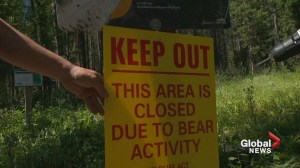 Bears force closure of popular hiking trails near Canmore