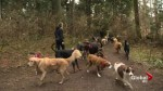 Squire Barnes explores the growing career of dog walking