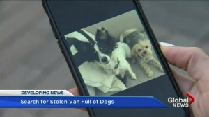 Distraught owners plead for return after van in Toronto stolen with dogs inside