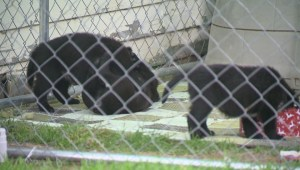 Regina dog rescue under intake freeze