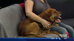 SCARS pets: Cinnamon the three-year-old dog