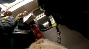 GoPro strapped to guide dog shows challenges of blind UK man's daily commute