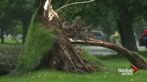 Storm damages Fredericton