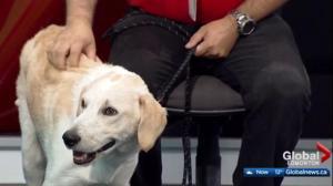 Edmonton Humane Society: Aero & Cheeto