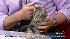 Edmonton Humane Society: Ralphie & Ash