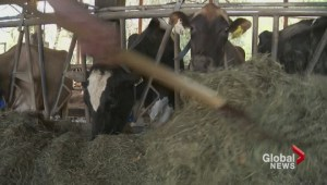 Dairy farmers protest U.S. imports