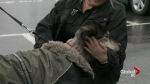 "SPCA find dog in ""worst condition ever seen"""