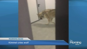Kimmel takes credit for fake Sochi Olympics wolf viral video