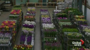 Squire's Take: United Flower Growers Auction