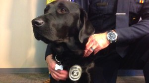 Trauma dog makes huge impact in Calgary