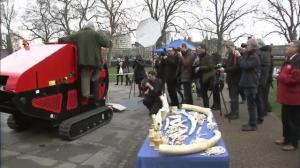 Activists destroy pile of ivory outside UK parliament