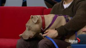 Pet of the Week: Cami