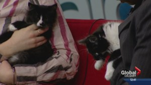 Pet of the Week: Dribble and Fluff