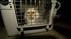 120 cats found in Wolseley home