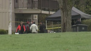 Raw: Woman's body found in Stanley Park
