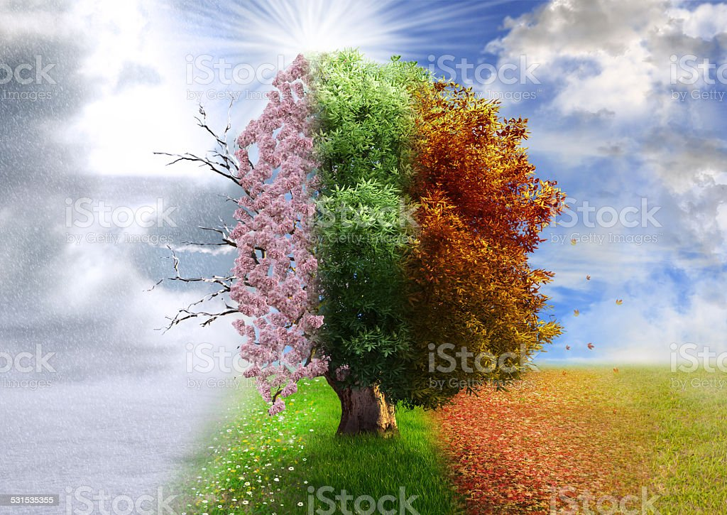 Royalty Free Season Pictures  Images and Stock Photos   iStock Four season tree  photo manipulation  magical  nature stock photo