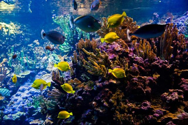 Hawaiian Tropical Fish from Travel to Maui in Pukalani, HI 96788