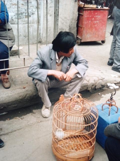 Kopia av fågelbur china