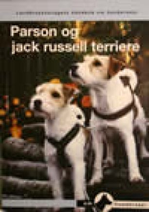 Parson og jack russell terriere