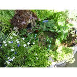 Small Crop Of Pics Of Fairy Gardens