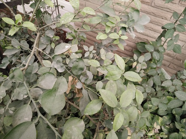 Oppo R7 Lite Camera Sample