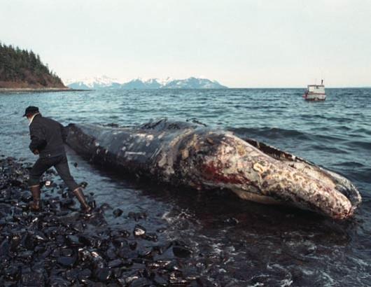 dead-whale1