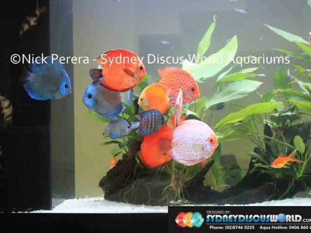 beautiful discus biotope style fish tank 2 years ago