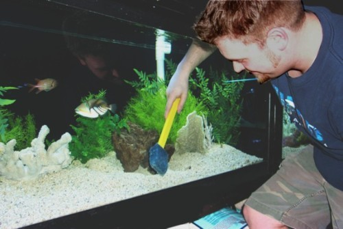 How do you clean your 55 gallon fish tank?   Aquarist's