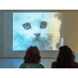 Amusing Interwebs Wired Moving Studies Mysterious Ways Cats Have Captured Our How Cats Became Rulers Cats Took Over A New Exhibit Up At New Museum bark post Ruler Of The Internet