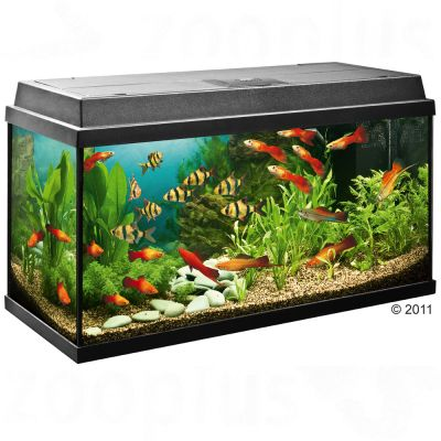 99433 juwel rekord800 1 7 Aquarium   Beginnerssets