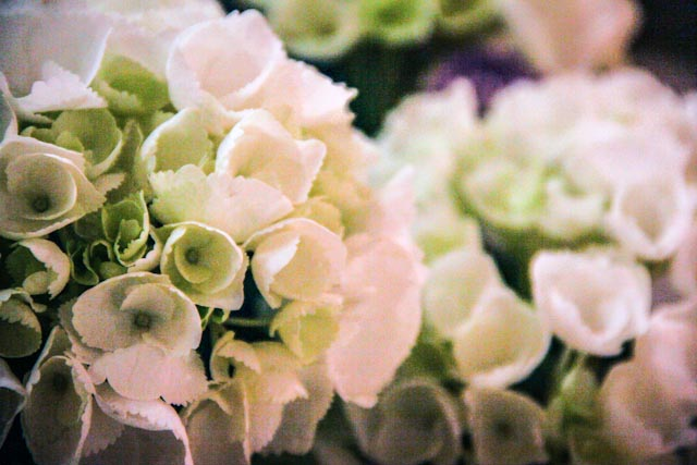 blommor.foto: BelleBluePhoto 2013