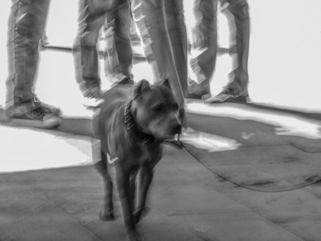 hund.foto: BelleBlue©Photo 2013