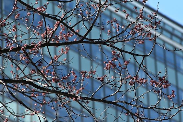 blommande träd.foto: BelleBlue©Photo 2014