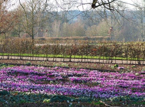 Wake up to spring at Wakehurst Place