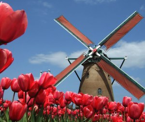 holland-no-sakura-city-tulip-festival-in-japan