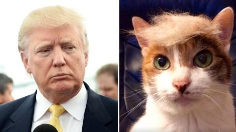 Donald Trump amenaza a joven de 17 años que hizo un sitio web de gatitos