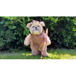 Small Crop Of Star Wars Dog