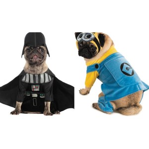 Charming Pug Pumpkin Costume Stock Superman Costume Pug Pumpkin