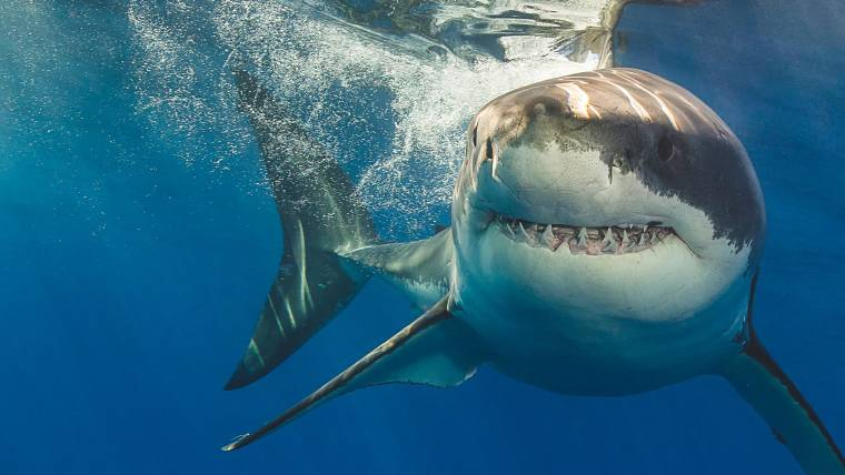 How to avoid a shark attack  Shark safety tips better