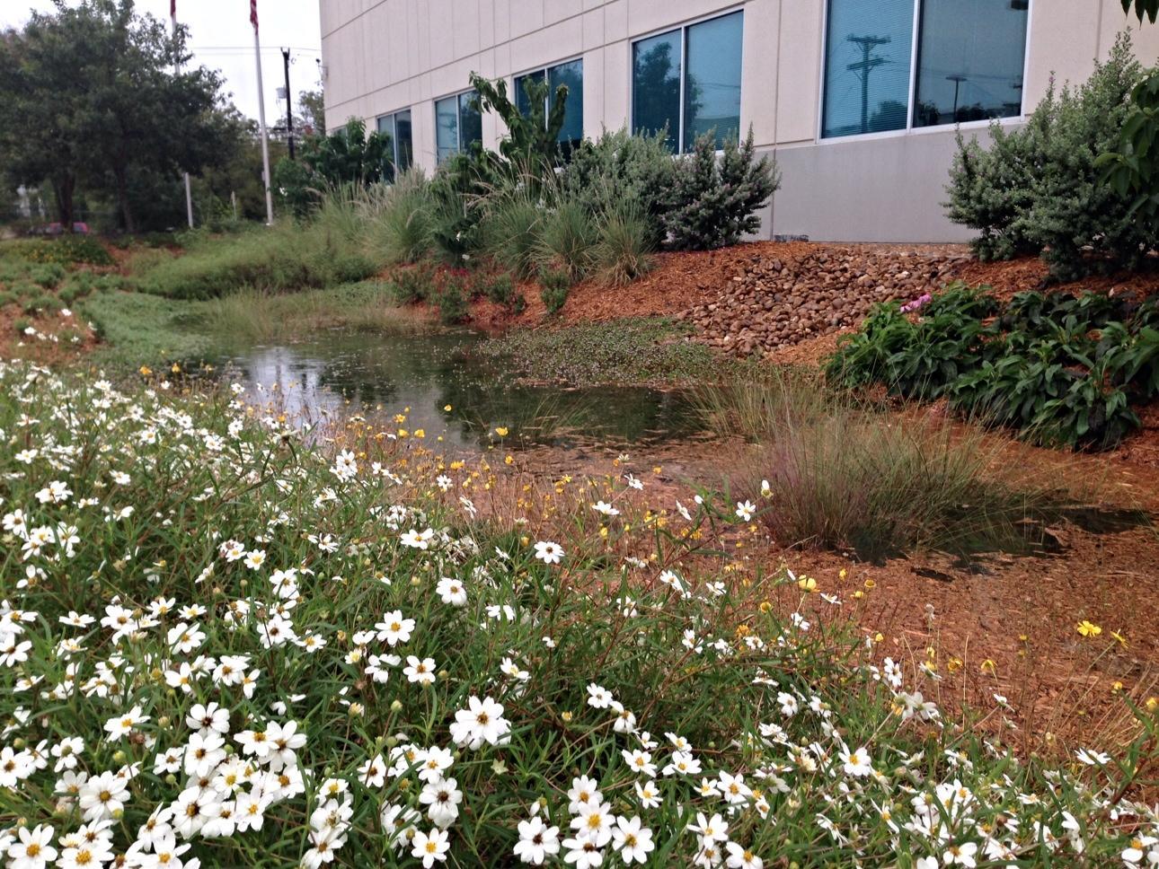 Fullsize Of Rain Garden Plants