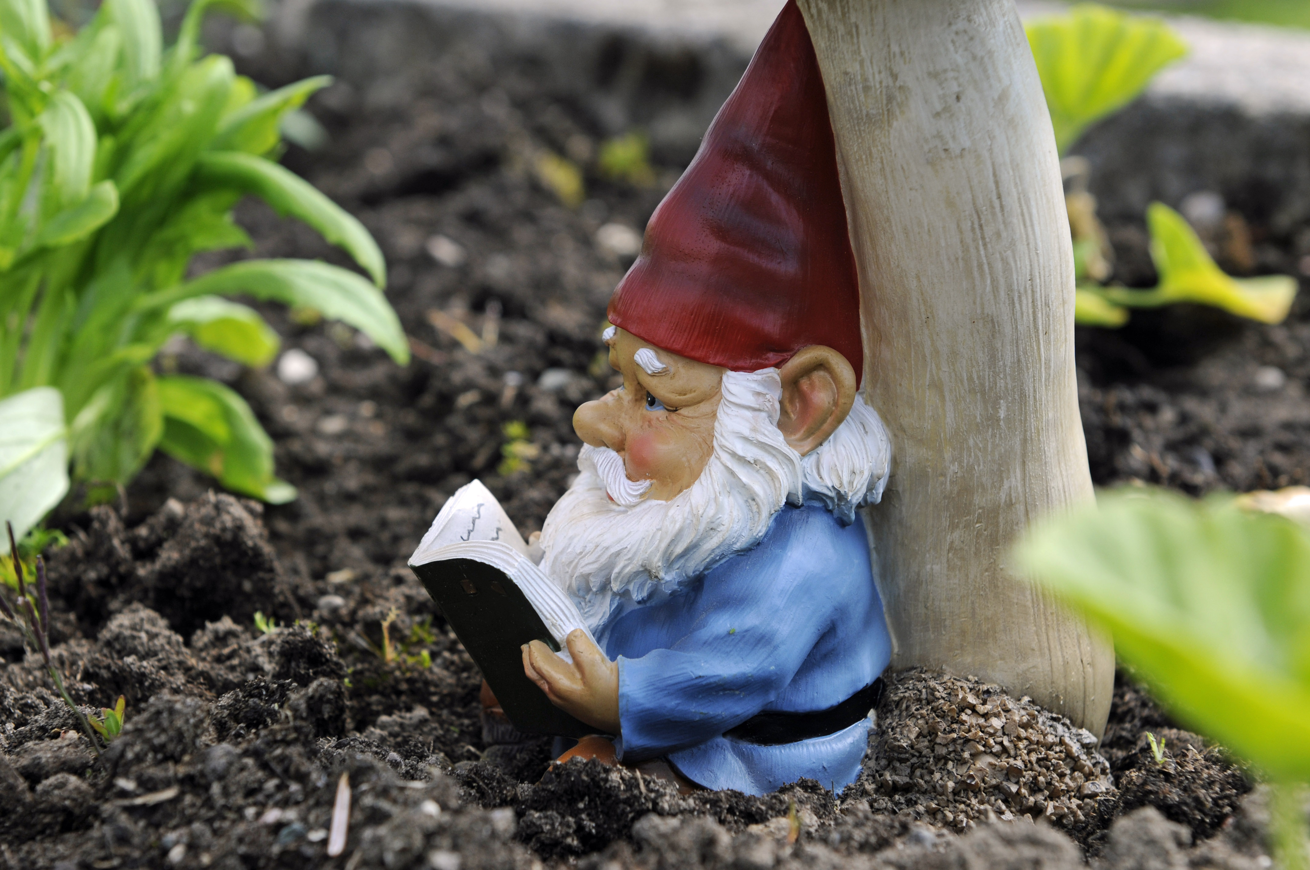 Tremendous You Need An Officer To Report Your Missing Garden Gnome Lollipops Fliers Left On House Lawns Claim To Be From Kkk Small Plastic Garden Gnomes Small Garden Gnomes Uk garden Small Garden Gnome