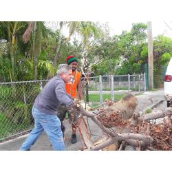 Small Crop Of Free Tree Removal