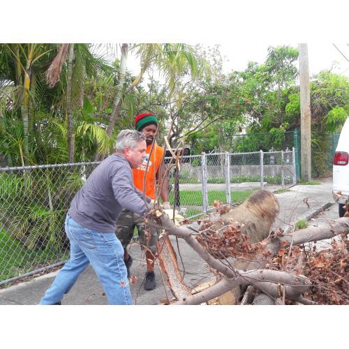 Medium Crop Of Free Tree Removal