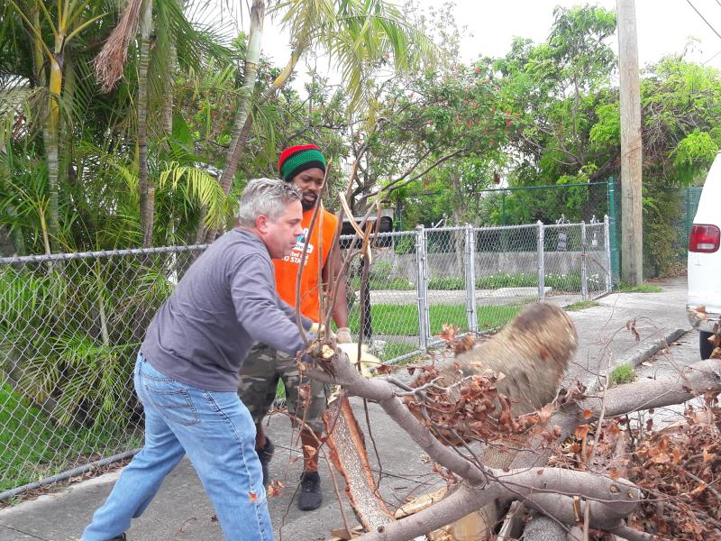 Large Of Free Tree Removal