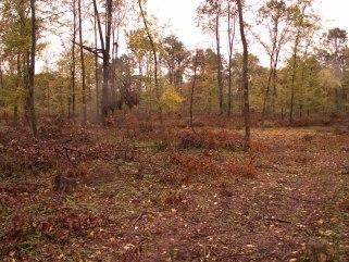 Imagine din pădure, la mijlocul anilor 2000, chiar după defrișări