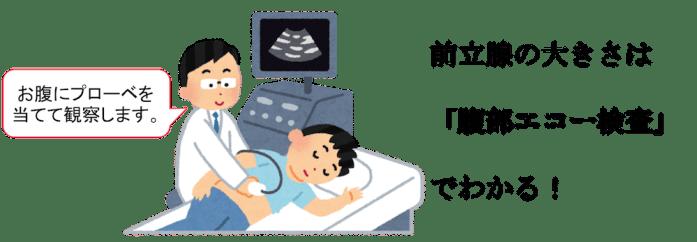 prostate size abdominal echo