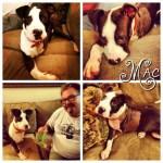 Mack's furever family!