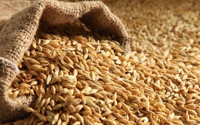 Barley-735x459.jpg